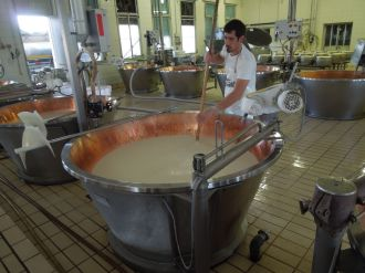 Parmesan Factory Tour